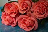 Beautiful Rose Flower In Garden. Rose Flower Background. Roses Flower Texture. Lovely Rose. Roses In poster