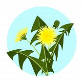 Vector Illustration Yellow Dandelions With Leaves And Flower. Dandelion Vector Icon Blowing Garden B poster