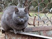 Gray Smoky Cat Sitting On The Garbage Can. Concept Of Stray Animals, Hungry Cat, Cold Weather, Winte poster
