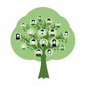Genealogical Family Tree With Avatars Isolated On White Background. Genealogy Tree For Dna Ancestors poster