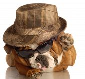 Bulldog Dressed Up Like A Gangster