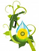pic of ethanol  - A bio fuel plant with sunflower ethanol featured - JPG