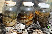foto of curio  - Closeup of Pickled Snakes in Namibia - JPG