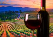 picture of merlot  - glass with red wine and bottle on the vineyards background atmosphere sunset - JPG