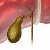 foto of bladders  - Gallbladder or gall bladder human internal organ as a function of the digestive system to store bile as part of the biliary system of the body as a medical illustration concept on a white background - JPG