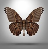 stock photo of surreal  - Change and adaptation concept with a an open wing bird shaped as a butterfly as a surreal symbol of new breed creative thinking and freedom in changing to adapt to new challenges in business and life - JPG