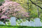 pic of arlington cemetery  - Arlington National Cemetery in Spring  - JPG