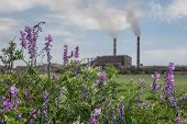 foto of ironworker  - violet flowers on a meadow with ironworks on background - JPG