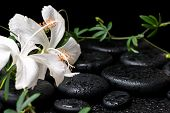 foto of tendril  - beautiful spa still life of blooming white hibiscus green twig with tendril passionflower and drops on zen basalt stones - JPG