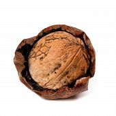 picture of crude  - Crude walnut isolated on white background - JPG
