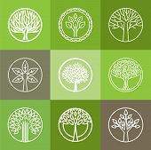 image of tree leaves  - Vector tree logo  - JPG