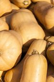 picture of butternut  - Butternut Butternuss cucurbita pumpkin pumpkins from autumn harvest on a market - JPG