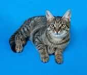image of yellow tabby  - Tabby kitten with yellow eyes lying on blue background - JPG