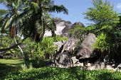 pic of enormous  - Enormous black granite rocks in the thickets of tropical vegetation - JPG
