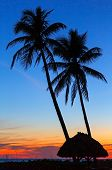 foto of gulf mexico  - Tall palm trees and a thatched roof shelter are silhouetted by a colorful sunset sky on the Gulf Coast of Florida - JPG