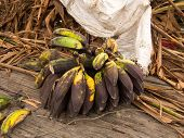 foto of bunch bananas  - Bunch of small ripe bananas freshly picked from the tree - JPG