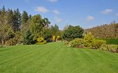 picture of horticulture  - Perfect lawn within an established English country garden boarders and mature trees and shrubs add to the flow of the garden - JPG
