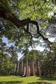 Постер, плакат: древние церковные руины в Шелдон Южная Каролина с live дубы охват