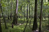 hardwood forest in south carolina