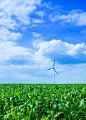 picture of wind-turbine  - clean energy white wind turbine in corn field - JPG