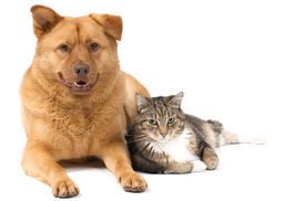 picture of cat dog  - Dog and Cat posing for the camera  - JPG