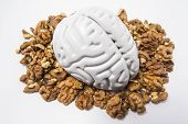 Walnuts Like Healthy Food For The Brain. Shape Of Human Brain Is Surrounded By Walnut Kernels. It Sy poster
