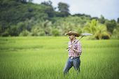 Young Farmers Grow Rice In The Rainy Season In The Rice Field poster