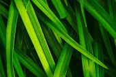 Natural Vivid Shiny Green Grass Close-up With Copy Space. Pure, Pleasant, Rich Greenery With Small D poster