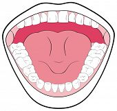 Opened Mouth Showing the Teeth, Tongue, Tonsils - Can be useful in Schools & Clinics - You can write