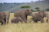 picture of breath taking  - Beautiful matata and her family  take a walk under the breath taking sun - JPG