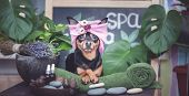 cute Pet Relaxing In Spa Wellness . Dog In A Turban Of A Towel Among The Spa Care Items And Plants. poster