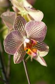 pic of freaky  - close up of Freaky orchid pink and yellow - JPG