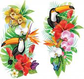 picture of toucan  - Tropical flowers - JPG