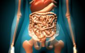 stock photo of excretory  - Digital illustration of human digestive system in colour background - JPG