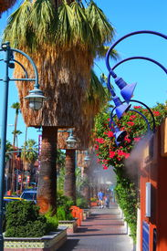 foto of snowbird  - Downtown Palm Springs - JPG
