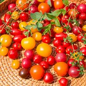 stock photo of picking tray  - Assorted colorful tomatoes and herbs from the garden - JPG