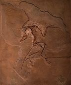 image of dinosaur skeleton  - Dinosaur fossils of Archaeopteryx in the rock - JPG