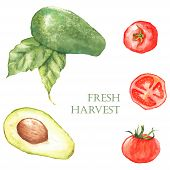 image of avocado  - Watercolor hand drawn illustration with fresh green avocado and red tomatoes on the white background - JPG