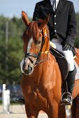 picture of bridle  - Brown horse portrait with bridle during horse show - JPG