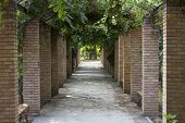 stock photo of royal botanic gardens  - Pergola in Athens park the National Garden  - JPG