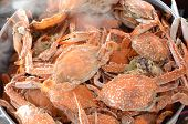 stock photo of steam  - Fresh Steamed crab in the steaming pot - JPG