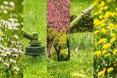 stock photo of grass-cutter  - collage images work in garden and dandelion and chamomile lawn with gasoline trimmer cutting fresh green grass - JPG