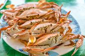 pic of cooked crab  - Stream Crabs on colorful dish  - JPG