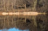 foto of ponds  - marthaler park and pond spring morning with reeds and bare trees bright against pond reflections in west saint paul minnesota - JPG