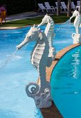foto of seahorse  - white seahorse statue fountain beside the swimming pool - JPG