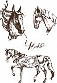 picture of brown horse  - graphic animal illustration horse brown on white background - JPG