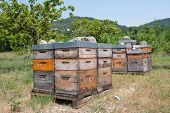 stock photo of honey bee hive  - Many bee hives outdoor in orchard - JPG