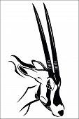 stock photo of antelope horn  - Vector illustration  - JPG