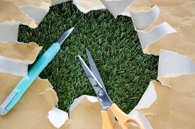 picture of grass-cutter  - scissors and cutter on torn paper with green grass background - JPG