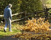 pic of leaf-blower  - man at a country home blowing leaves for fall clean up - JPG